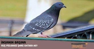 nsanın Tepesine Güvercin Pislemesi Şans Getirir Mi