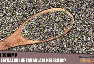 Kenevir Tohumu Nedir? Besin Değeri, Faydaları Ve Zararları Nelerdir?